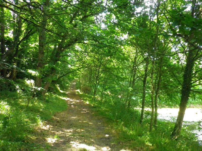 La forêt de Floranges - La Chapelle-Neuve